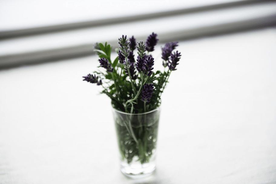 lavande plantes vertes