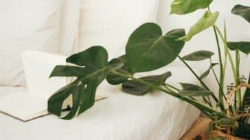 plantes vertes pour mieux dormir