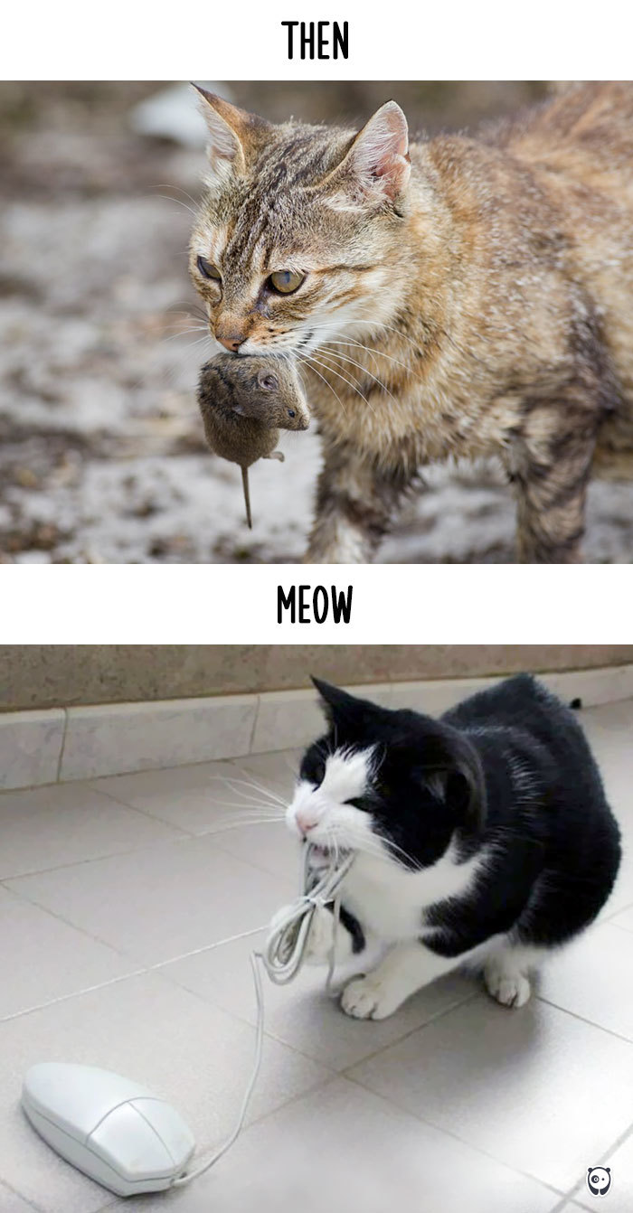 comment la technologie a change la vie des chats (5)