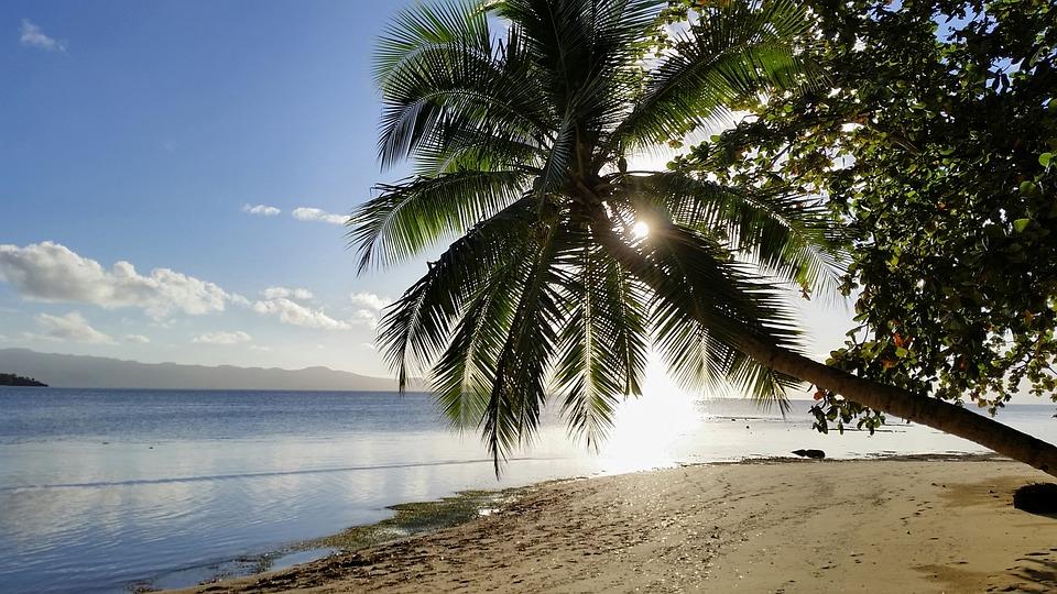 palmier plage île