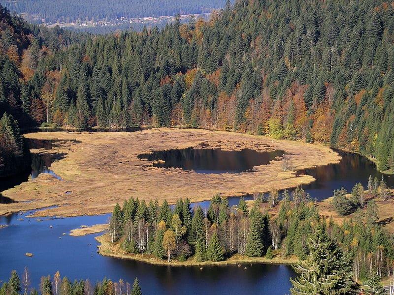 lac de Lispach forêt