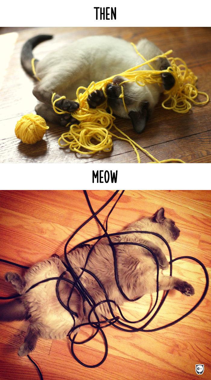 quand la technologie change la vie des chats (2)