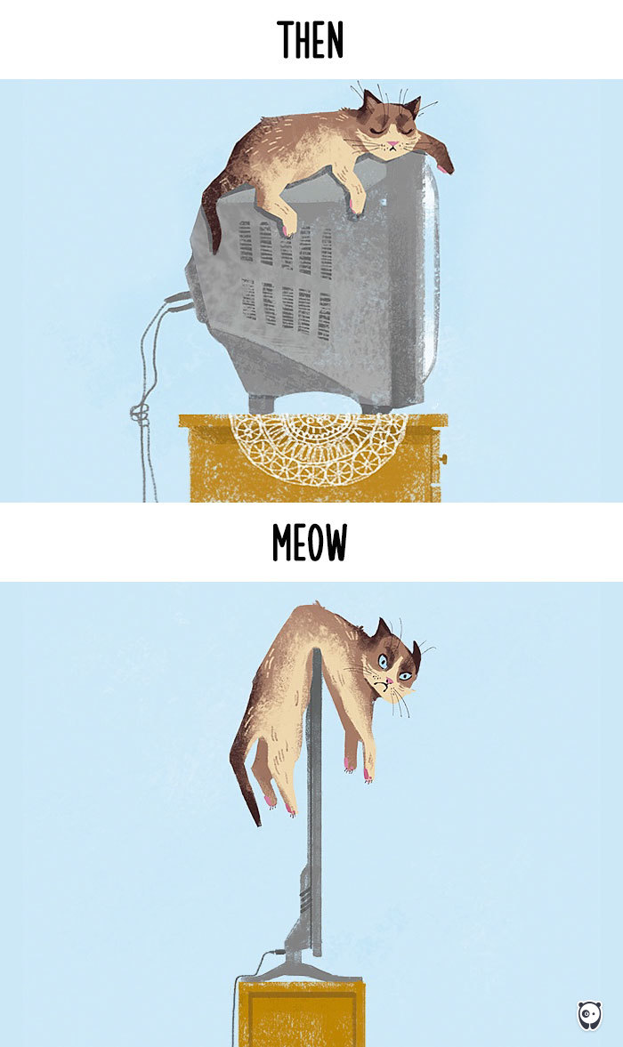 quand la technologie change la vie des chats (7)