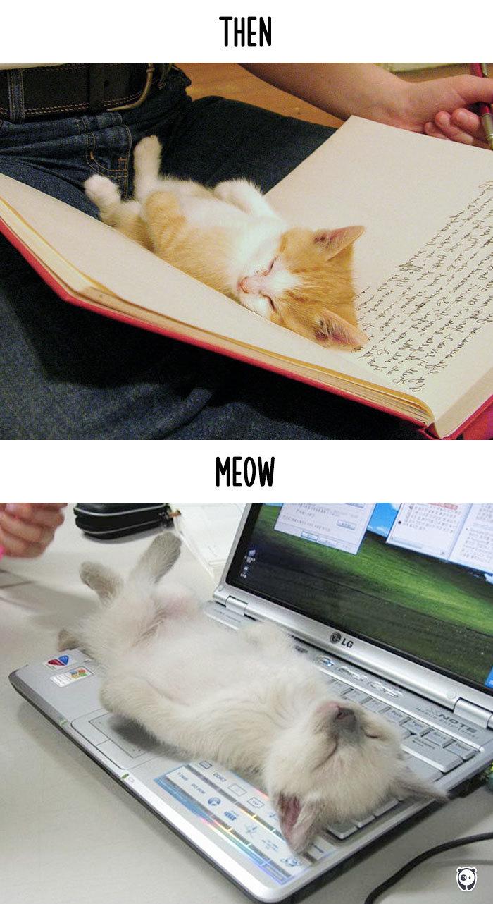 quand la technologie change la vie des chats (8)