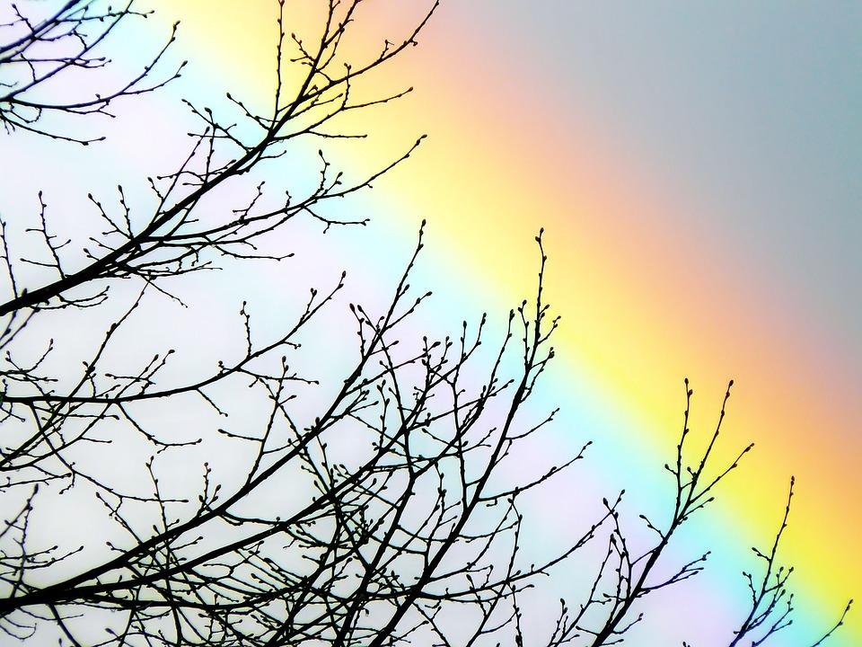 branches d'arbre couleurs ciel