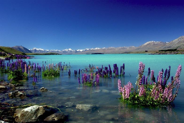 Tekapo lac plus beaux lacs du monde Planète