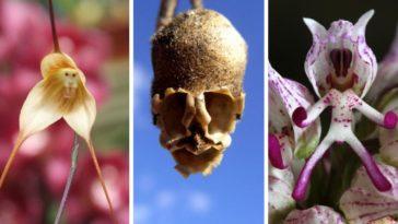 fleurs forme humaine animale