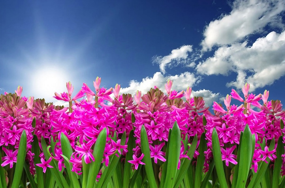 fleurs printemps prénoms interdits par la loi