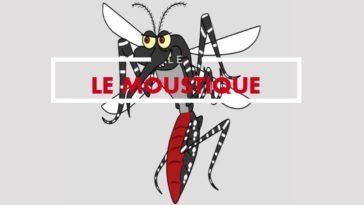 animaux les plus dangereux moustique