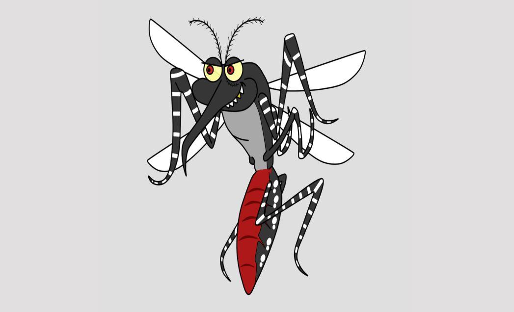 insecte moustique
