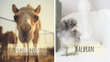 noms bébés animaux