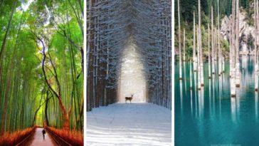 photos de forêts paysage nature beaute