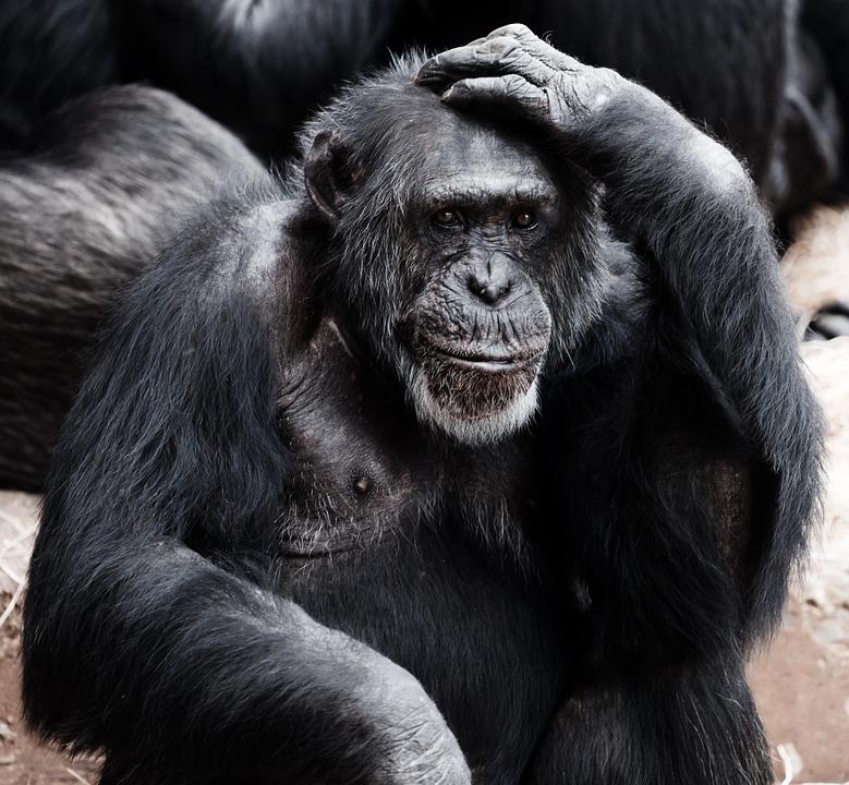 top 10 des animaux les plus intelligents (2)