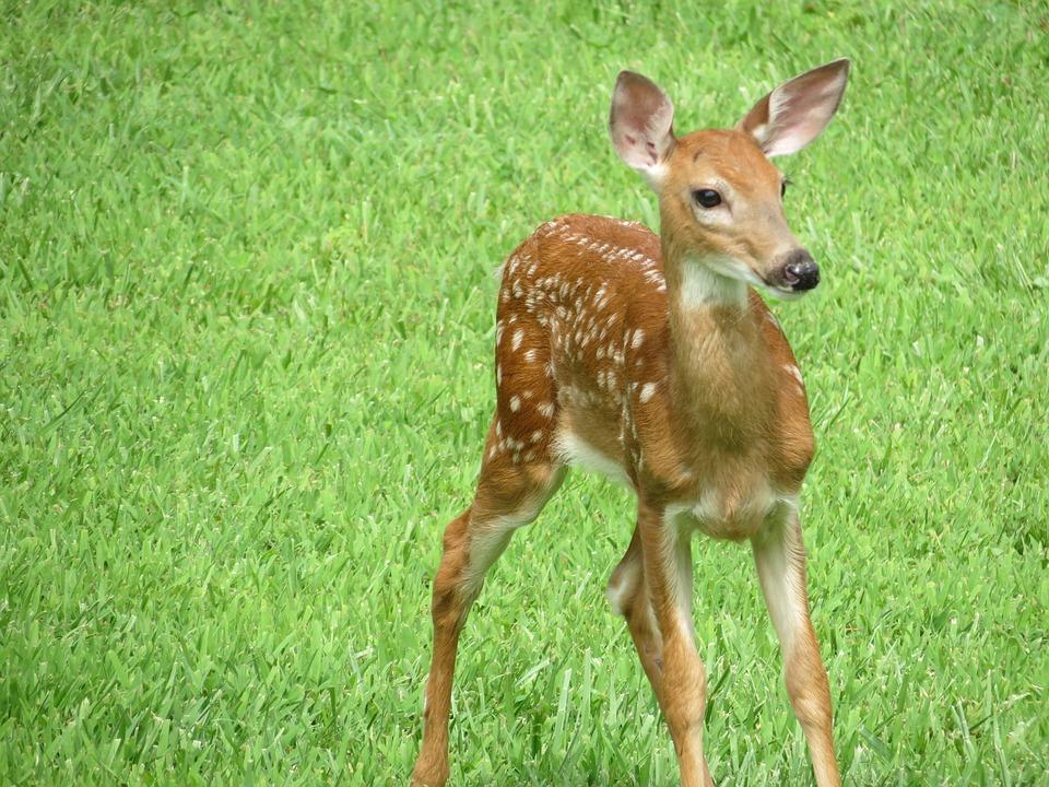Top 10 des noms de b b s animaux qu 39 on ne soup onnait pas - Image bebe animaux ...