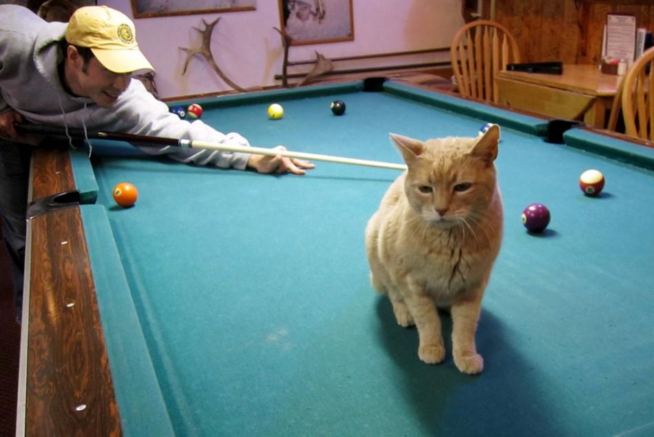 travel-blog-cat-mayor-pool-table-2-950x635