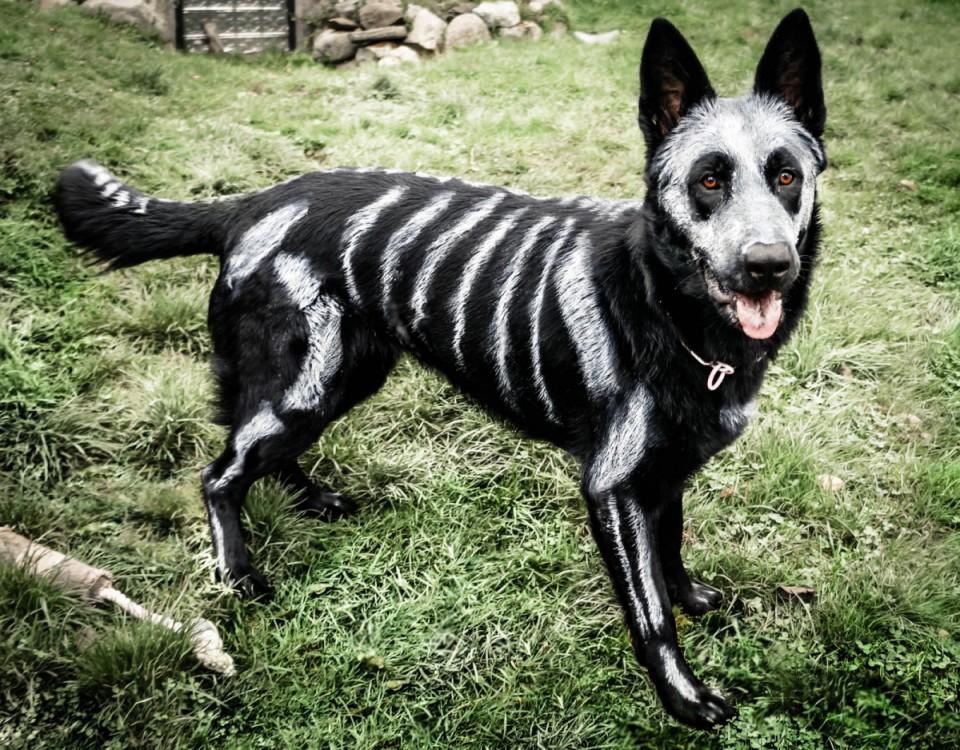 costume pour chien squelette