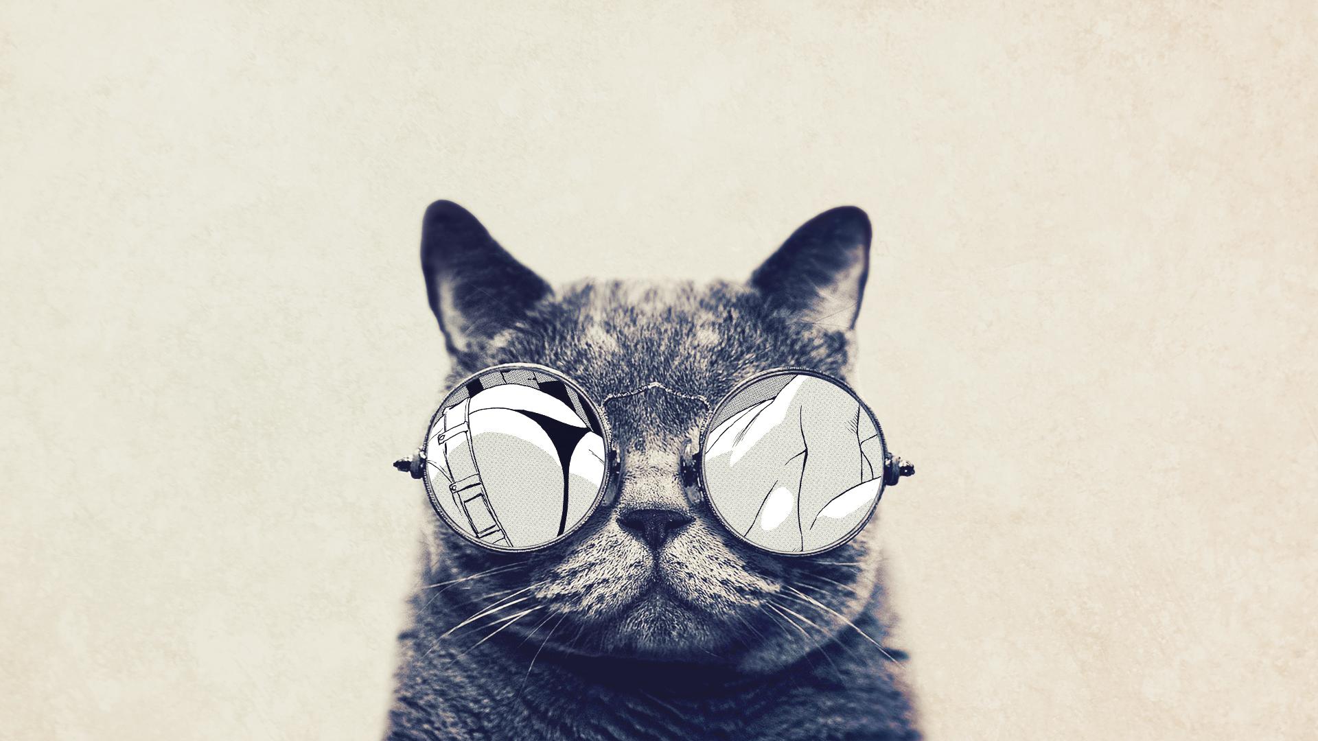 comment-les-chats-voient-le-monde-10-photos-vues-par-un-humain-vs-par-un-felin-1