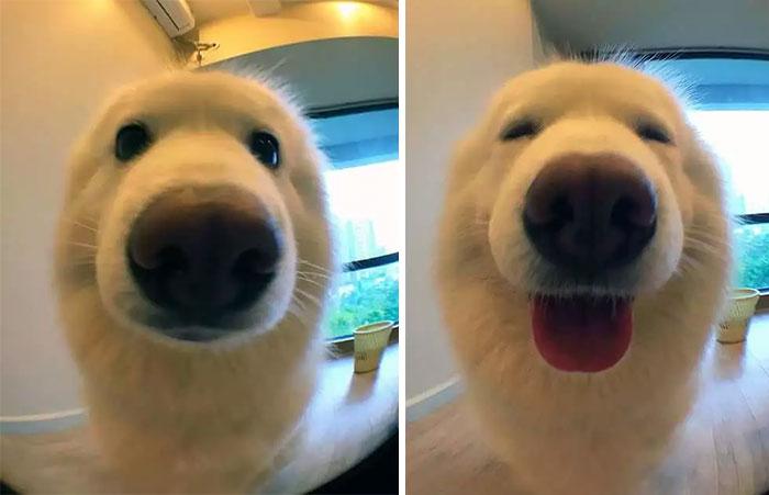 avant-après chiens maitres félicitations récompenser feliciter