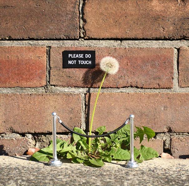 dessins urbains tags graffitis fleur pissenlit