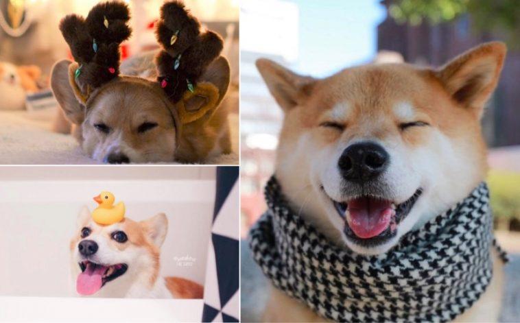 Cute Dog Instagram Photos - Glamour