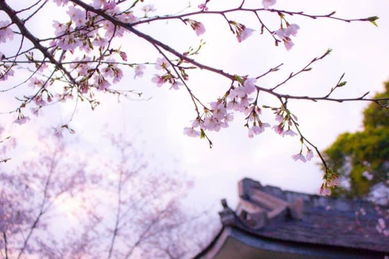 écoles japonaises
