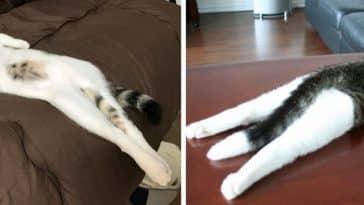 chats qui s'étirent