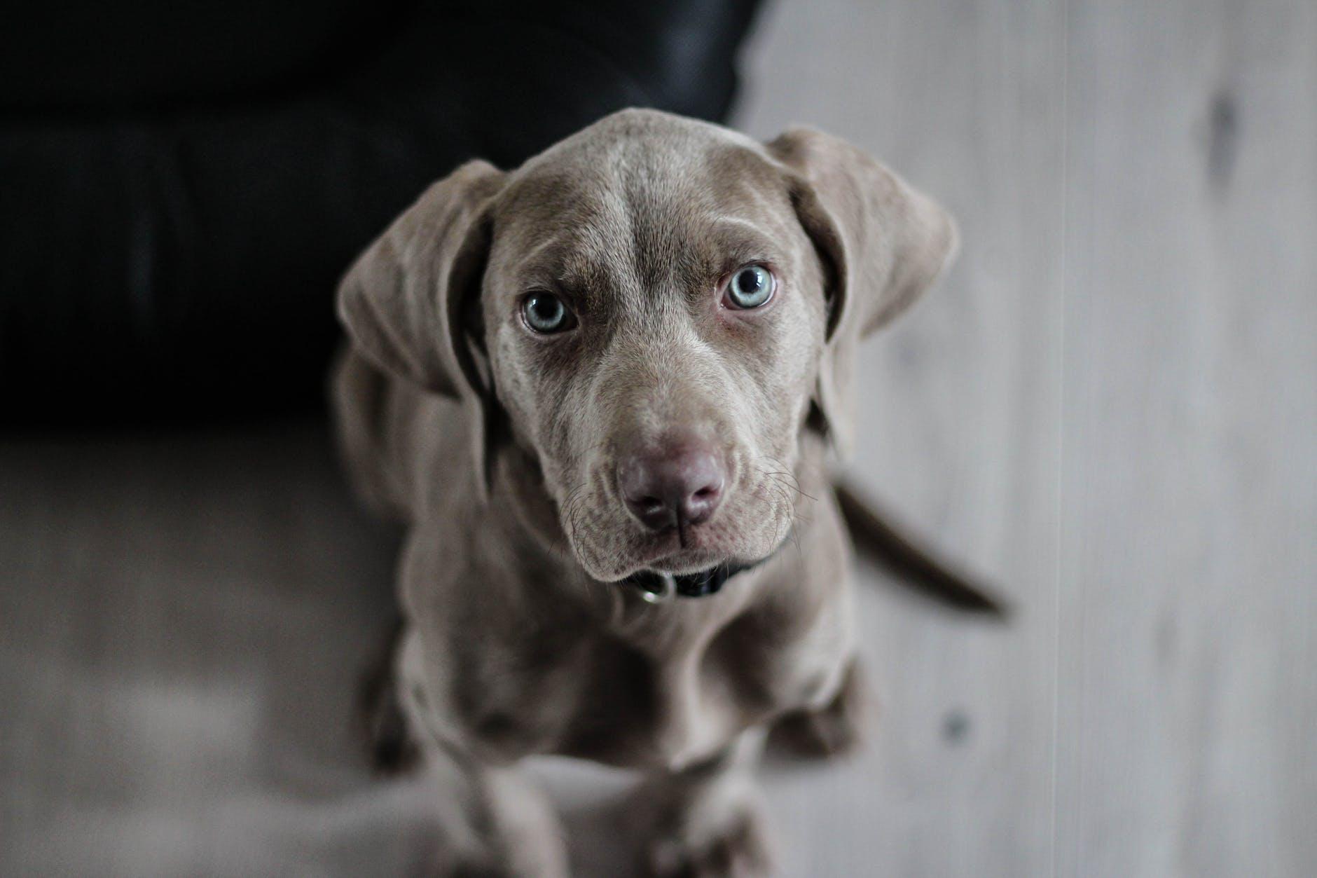 interdictions invraisemblables chien
