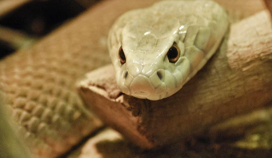antarctic snake