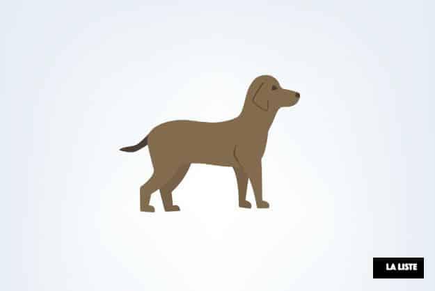 expressions québécoises chien
