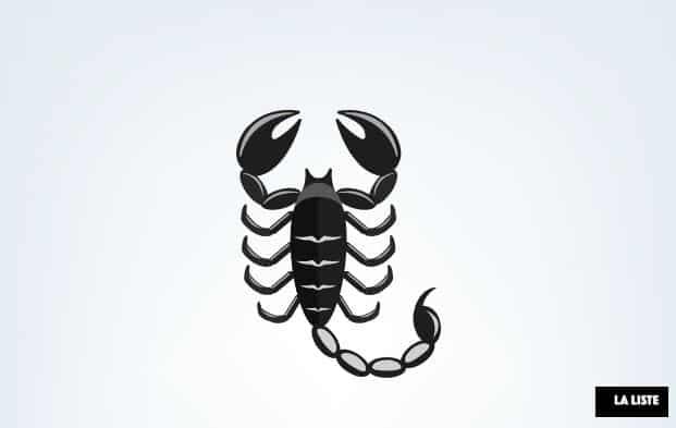 scorpion insecte dangereux