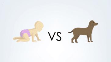 enfant vs chien