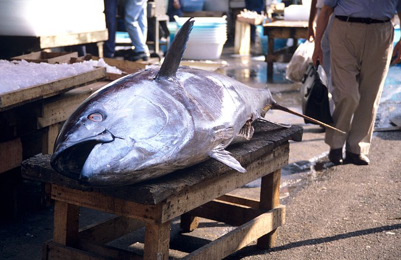 espèces en voie de disparition poisson