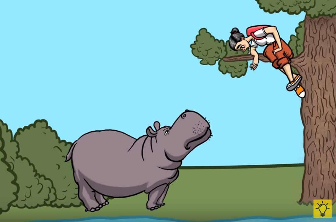 attaque animale hippopotame