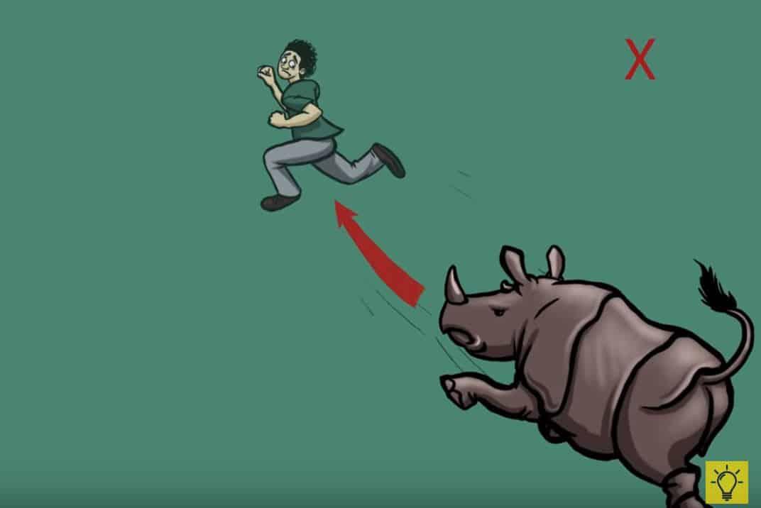 attaque animale rhinocéros