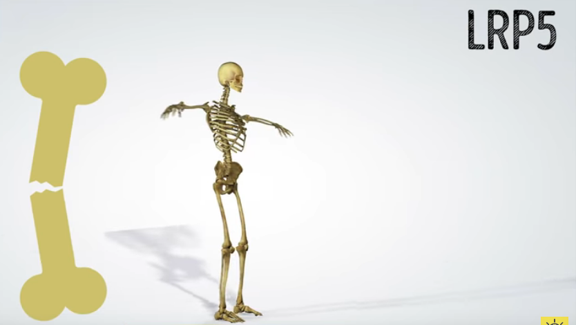 squelette os