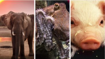 top 10 des animaux les plus intelligents du monde