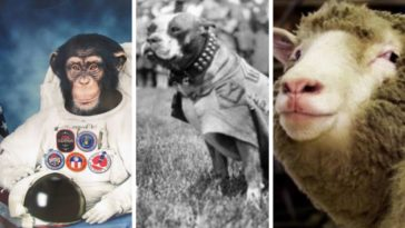 10 animaux qui ont marque l Histoire