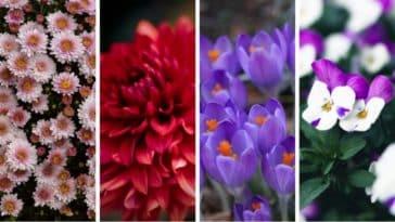 symbolique fleurs