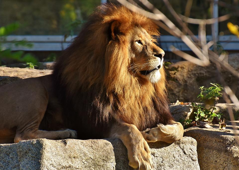 Lion most dangerous animals