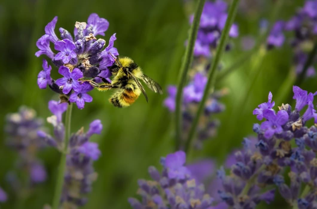 abeilles animaux indispensables planete