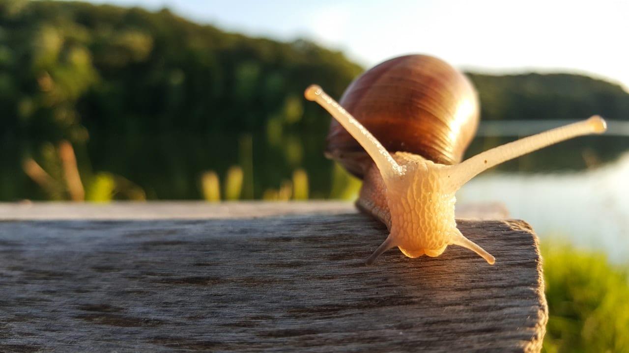 escargot bave