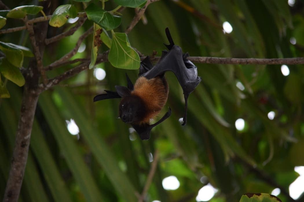 chauves-souris animaux indispensable planete