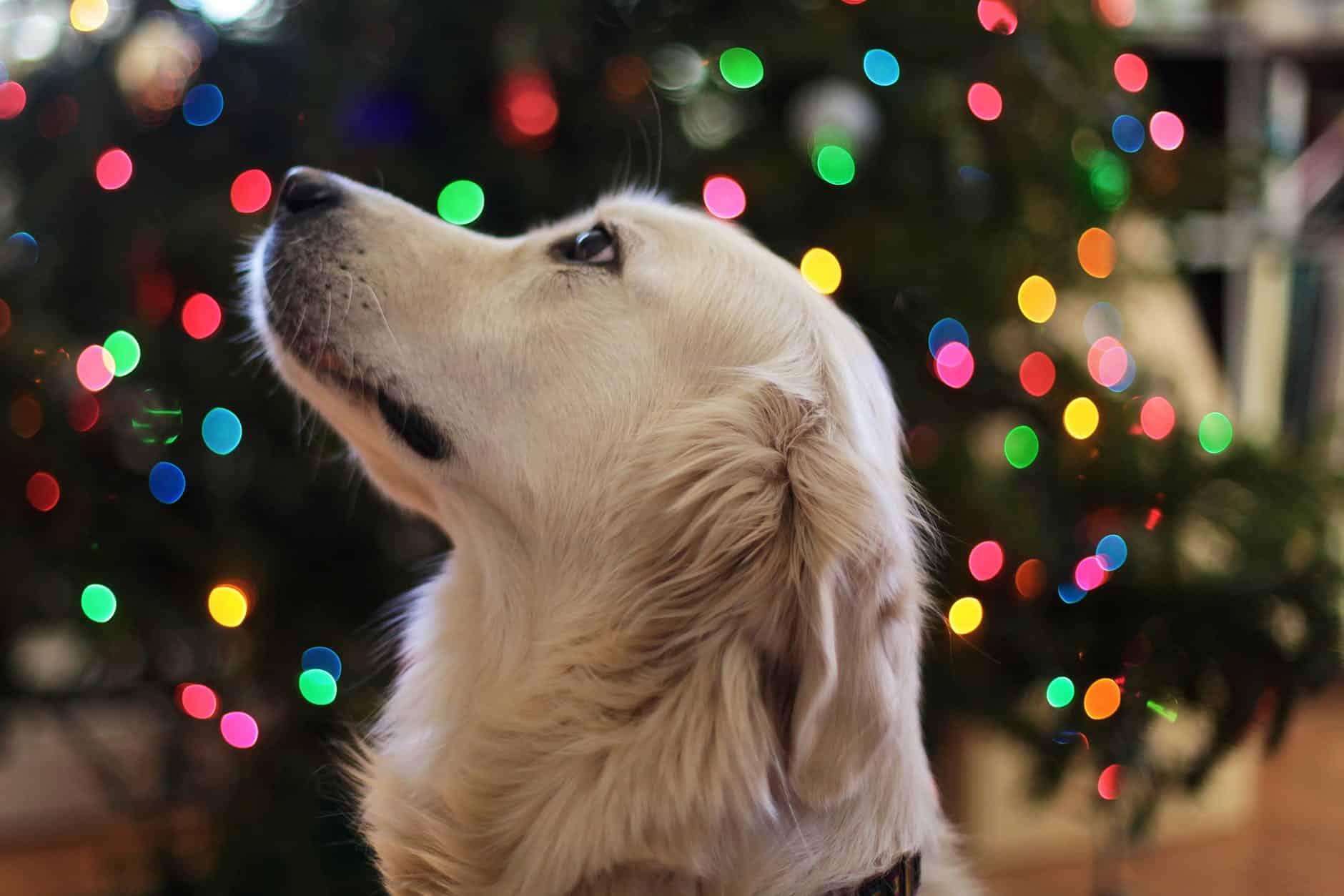 chien animaux les plus intelligents