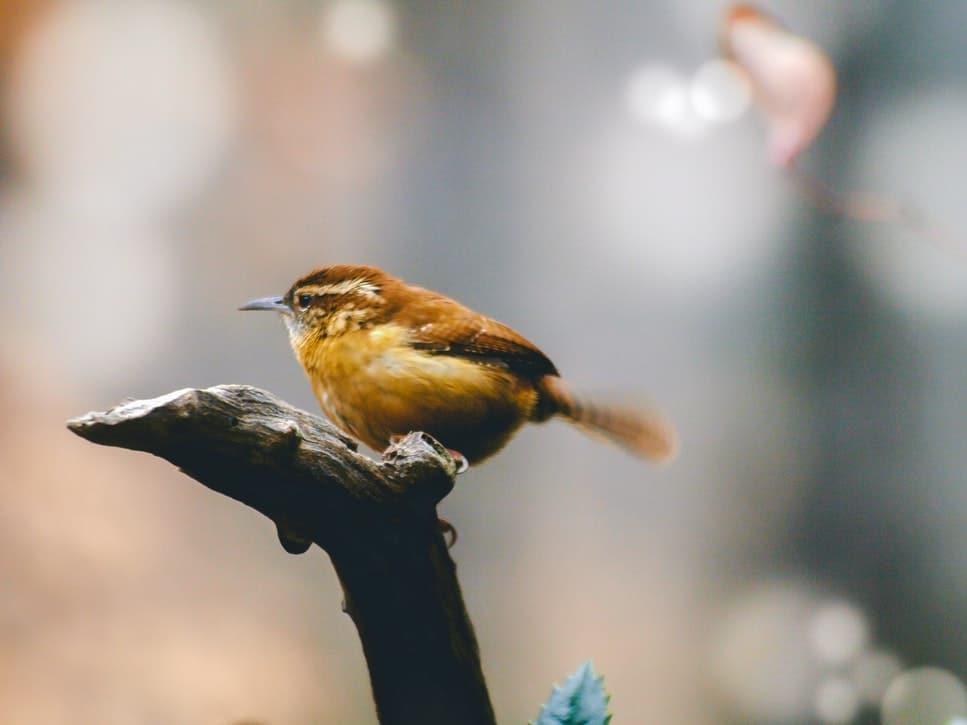 oiseaux animaux indispensables planete