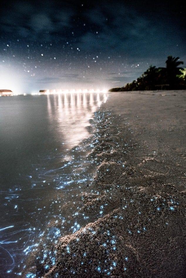 plancton plage lumineuse sable