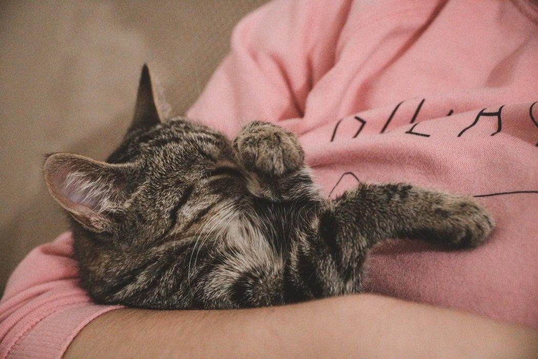 chat mignon mots intraduisibles en francais
