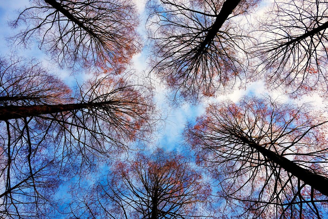 cime arbres astuces de radins