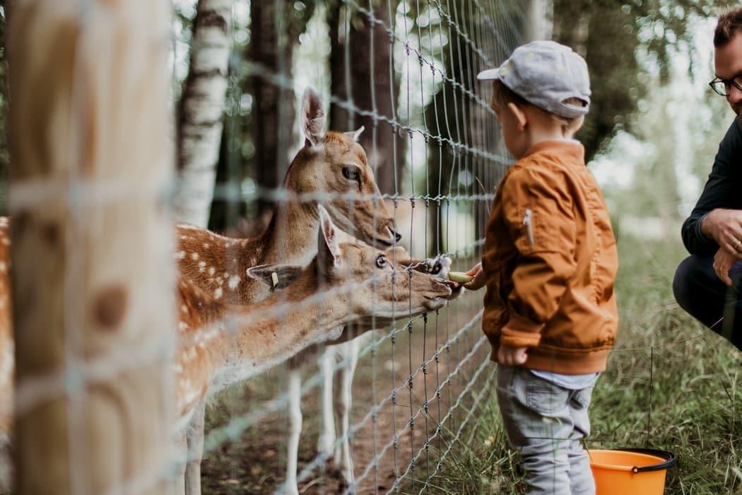 enfant zoo comment les enfants percoivent le monde