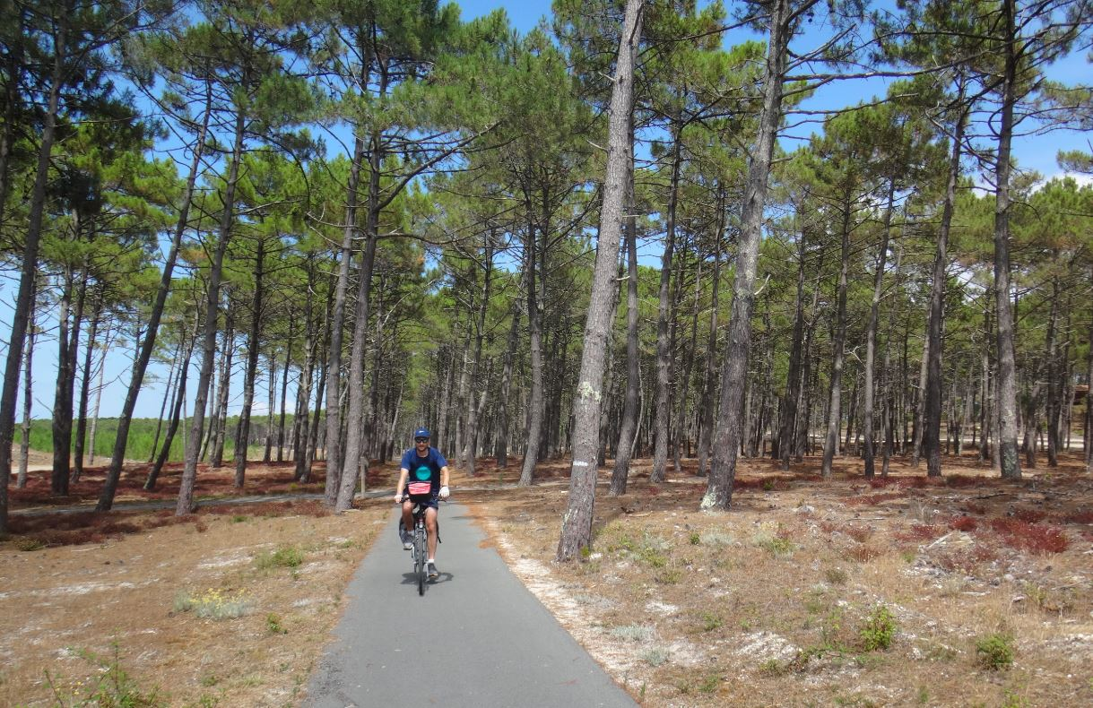 vélos pédaler forêt de pins maritimes