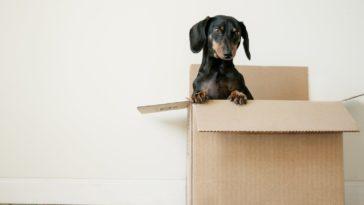carton de déménagement chien liste choses à faire